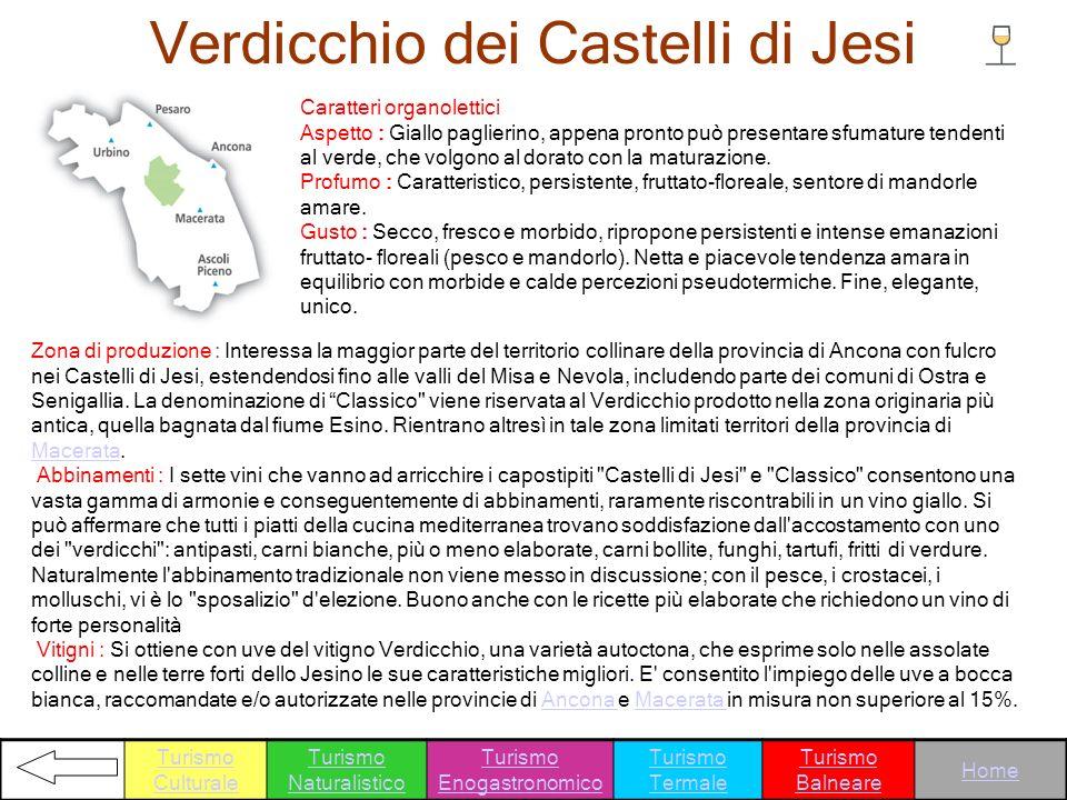 Verdicchio dei Castelli di Jesi