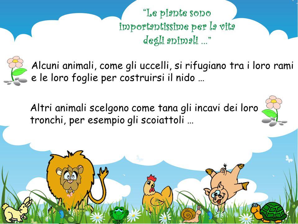 Le piante sono importantissime per la vita degli animali …