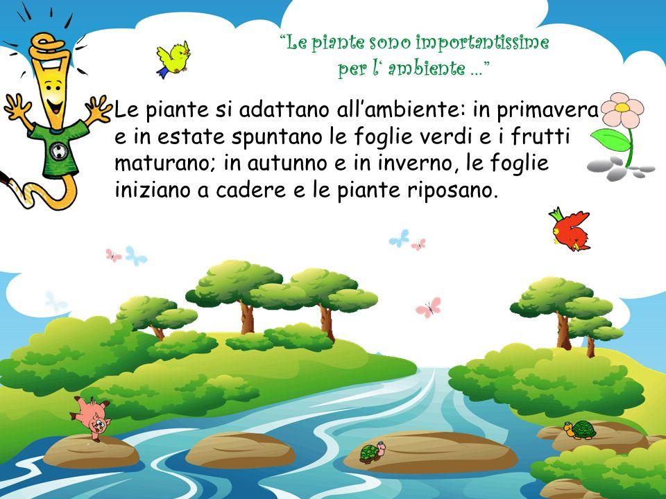 Le piante sono importantissime per l' ambiente …