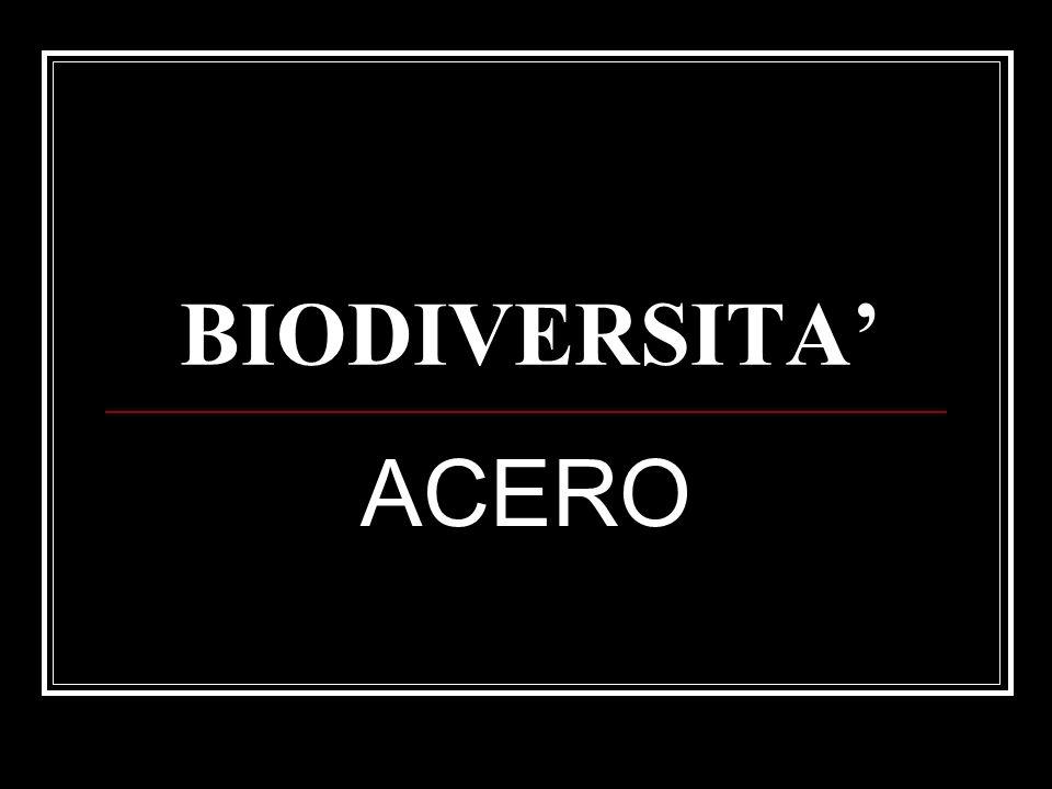BIODIVERSITA' ACERO