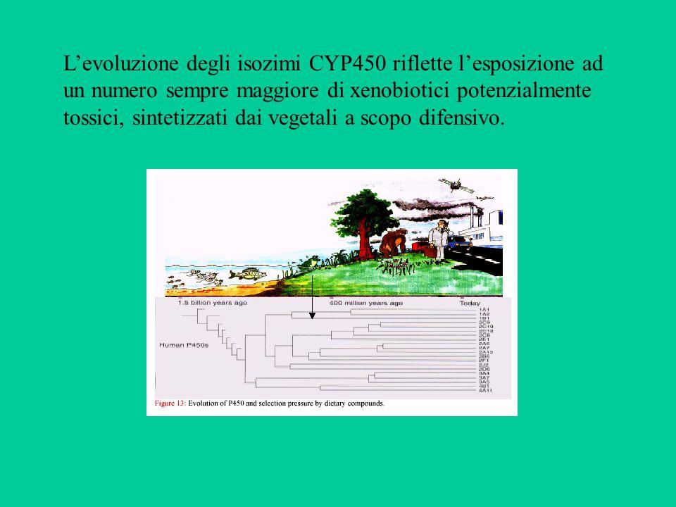 L'evoluzione degli isozimi CYP450 riflette l'esposizione ad un numero sempre maggiore di xenobiotici potenzialmente tossici, sintetizzati dai vegetali a scopo difensivo.