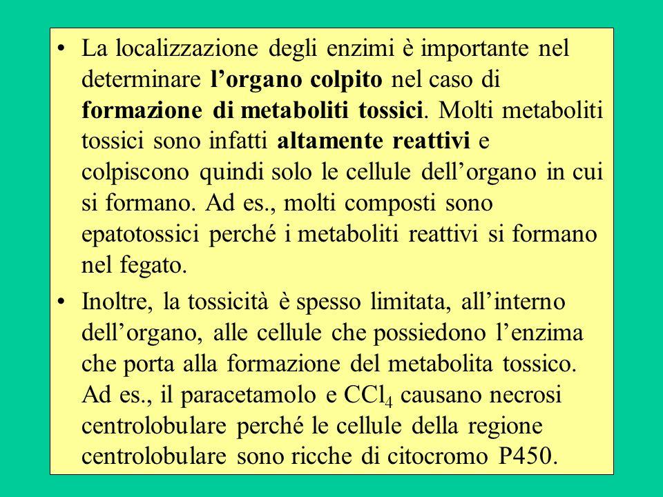 La localizzazione degli enzimi è importante nel determinare l'organo colpito nel caso di formazione di metaboliti tossici. Molti metaboliti tossici sono infatti altamente reattivi e colpiscono quindi solo le cellule dell'organo in cui si formano. Ad es., molti composti sono epatotossici perché i metaboliti reattivi si formano nel fegato.