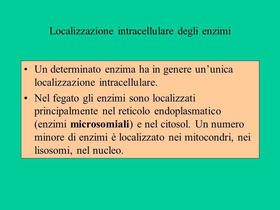 Localizzazione intracellulare degli enzimi