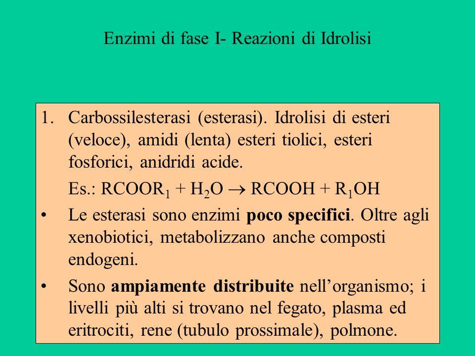 Enzimi di fase I- Reazioni di Idrolisi