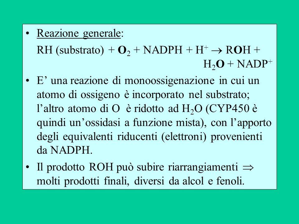Reazione generale: RH (substrato) + O2 + NADPH + H+  ROH + H2O + NADP+