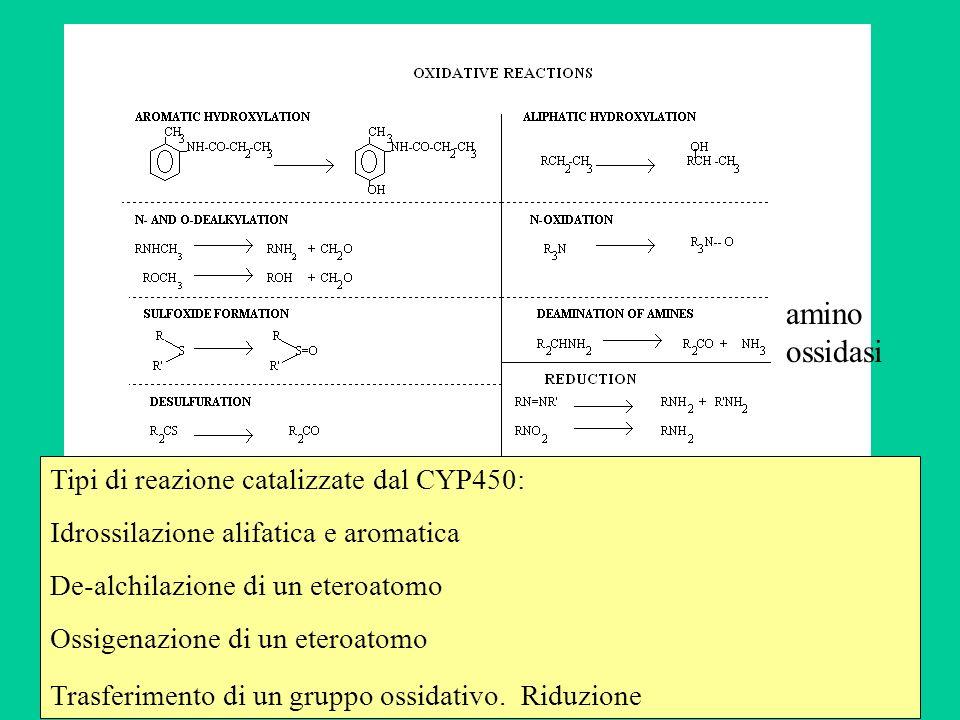amino ossidasi Tipi di reazione catalizzate dal CYP450: