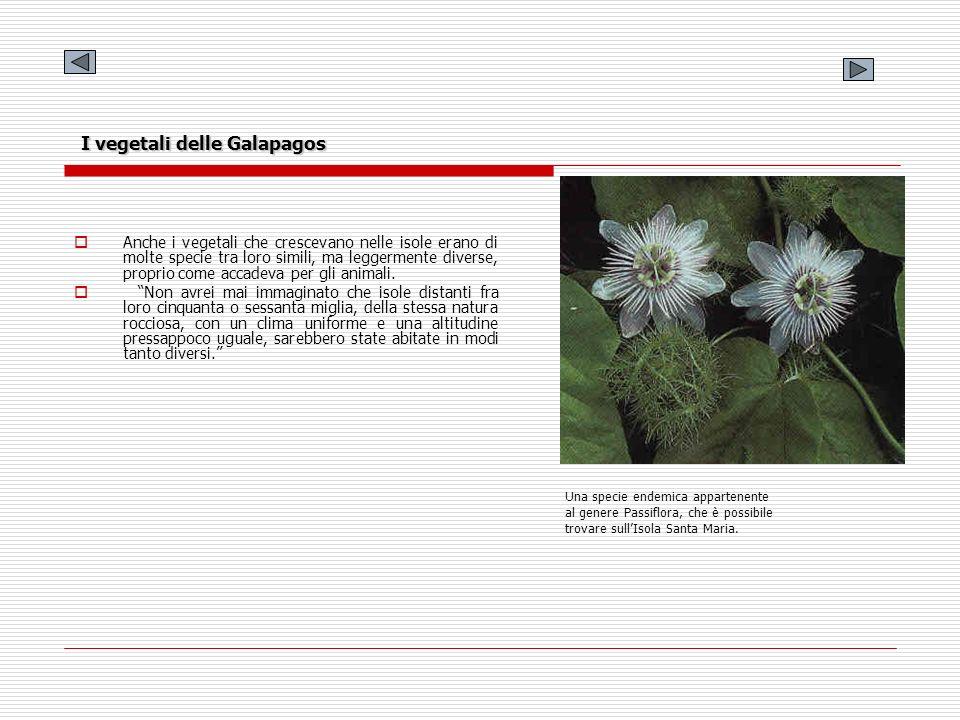 I vegetali delle Galapagos