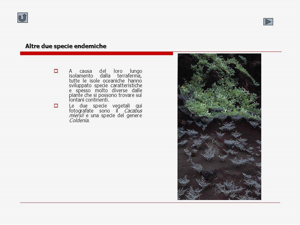 Altre due specie endemiche