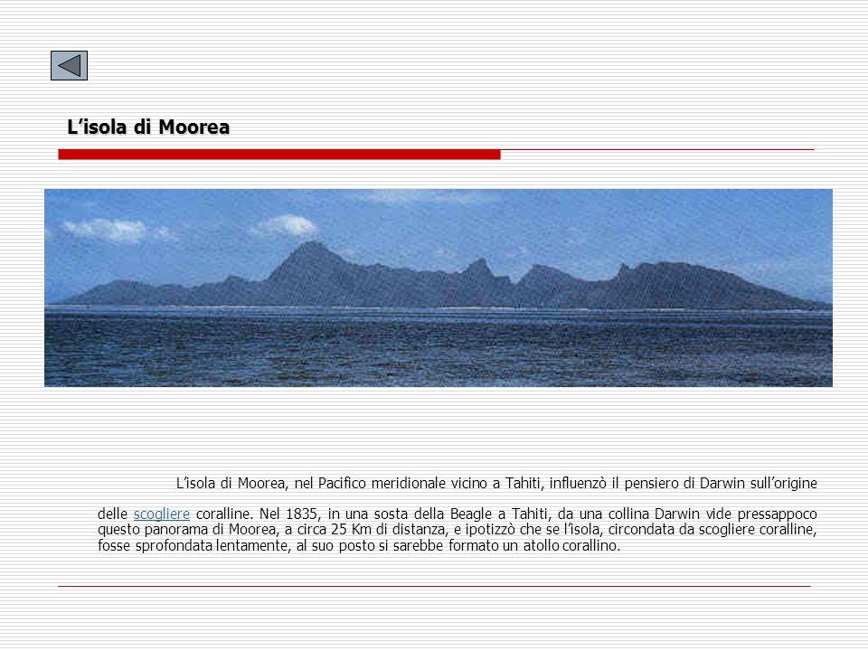 L'isola di Moorea