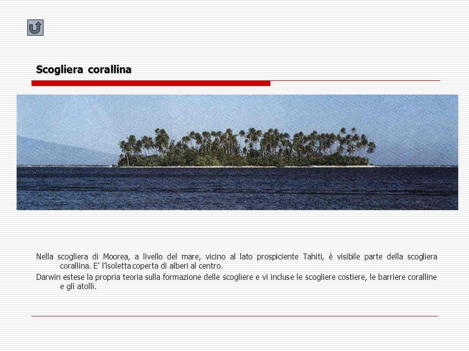 Scogliera corallina