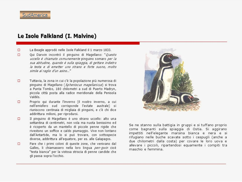Le Isole Falkland (I. Malvine)