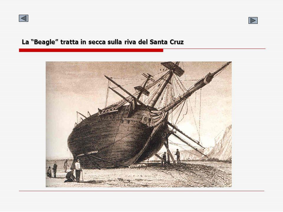 La Beagle tratta in secca sulla riva del Santa Cruz