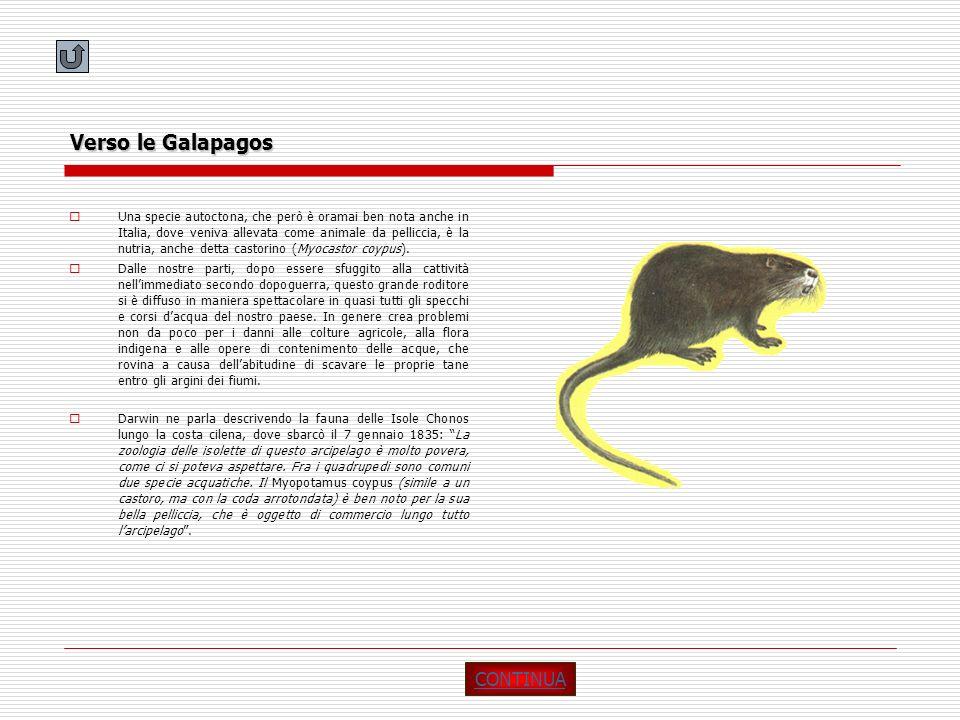Verso le Galapagos CONTINUA