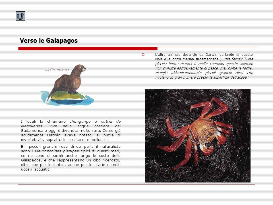 Verso le Galapagos