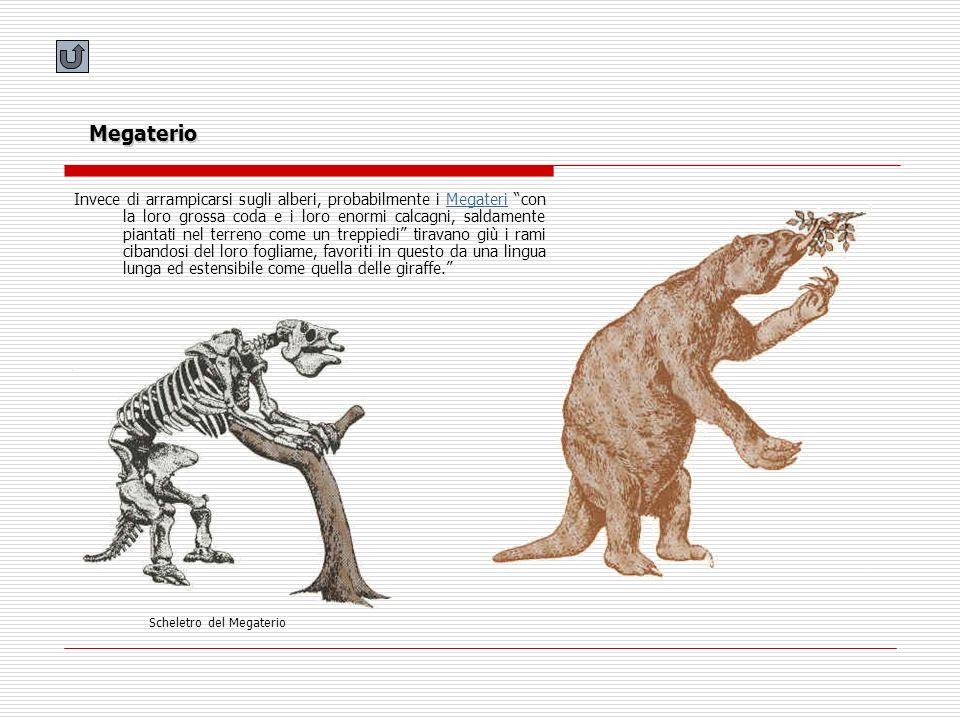 Megaterio