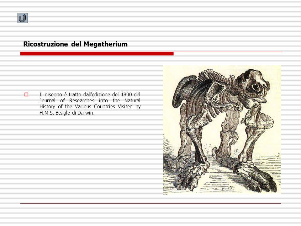 Ricostruzione del Megatherium