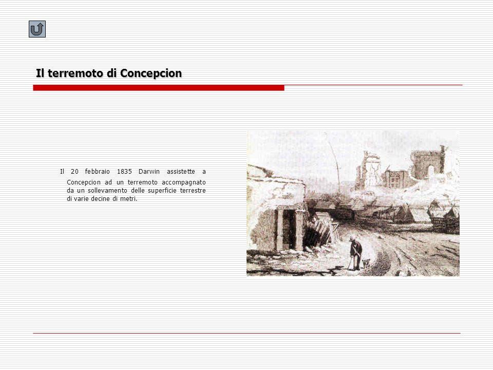 Il terremoto di Concepcion