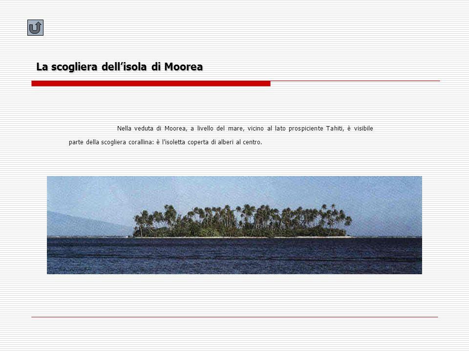 La scogliera dell'isola di Moorea