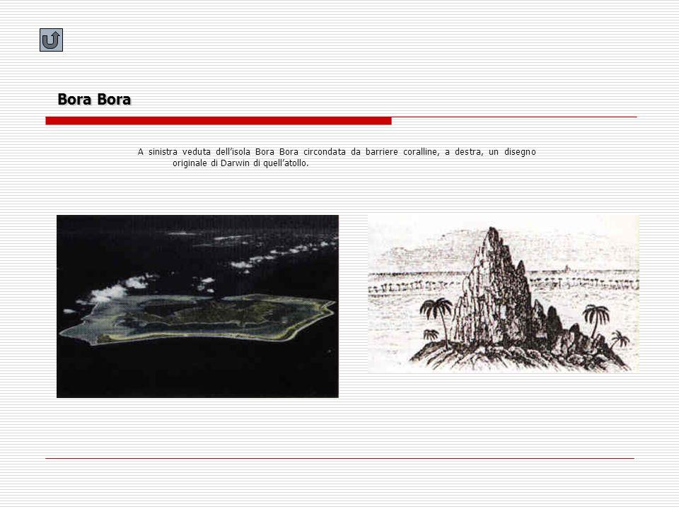 Bora Bora A sinistra veduta dell'isola Bora Bora circondata da barriere coralline, a destra, un disegno originale di Darwin di quell'atollo.