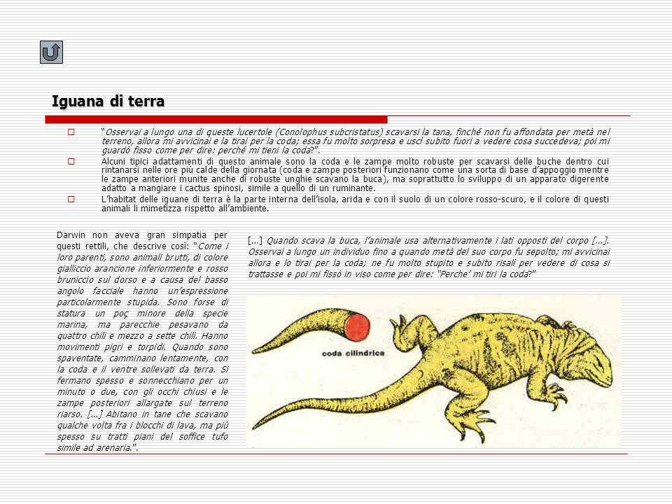 Iguana di terra