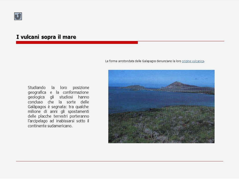 I vulcani sopra il mare Le forme arrotondate delle Galapagos denunciano la loro origine vulcanica.