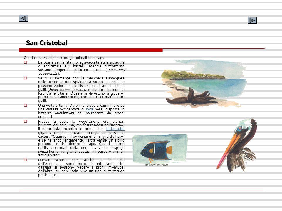 San Cristobal Qui, in mezzo alle barche, gli animali imperano.
