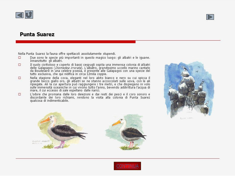 Punta Suarez Nella Punta Suarez la fauna offre spettacoli assolutamente stupendi.