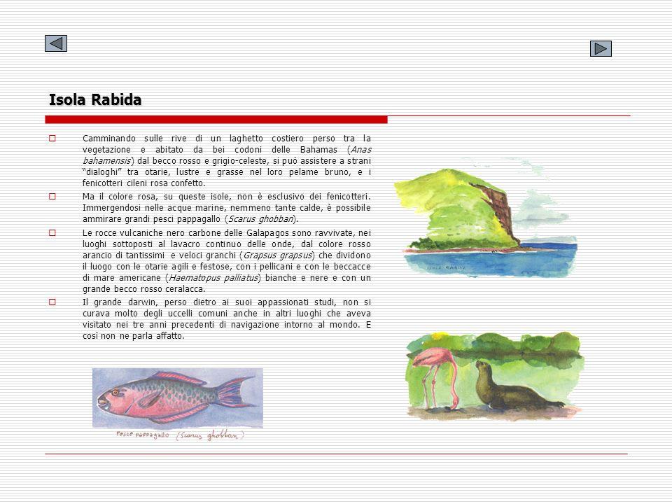Isola Rabida