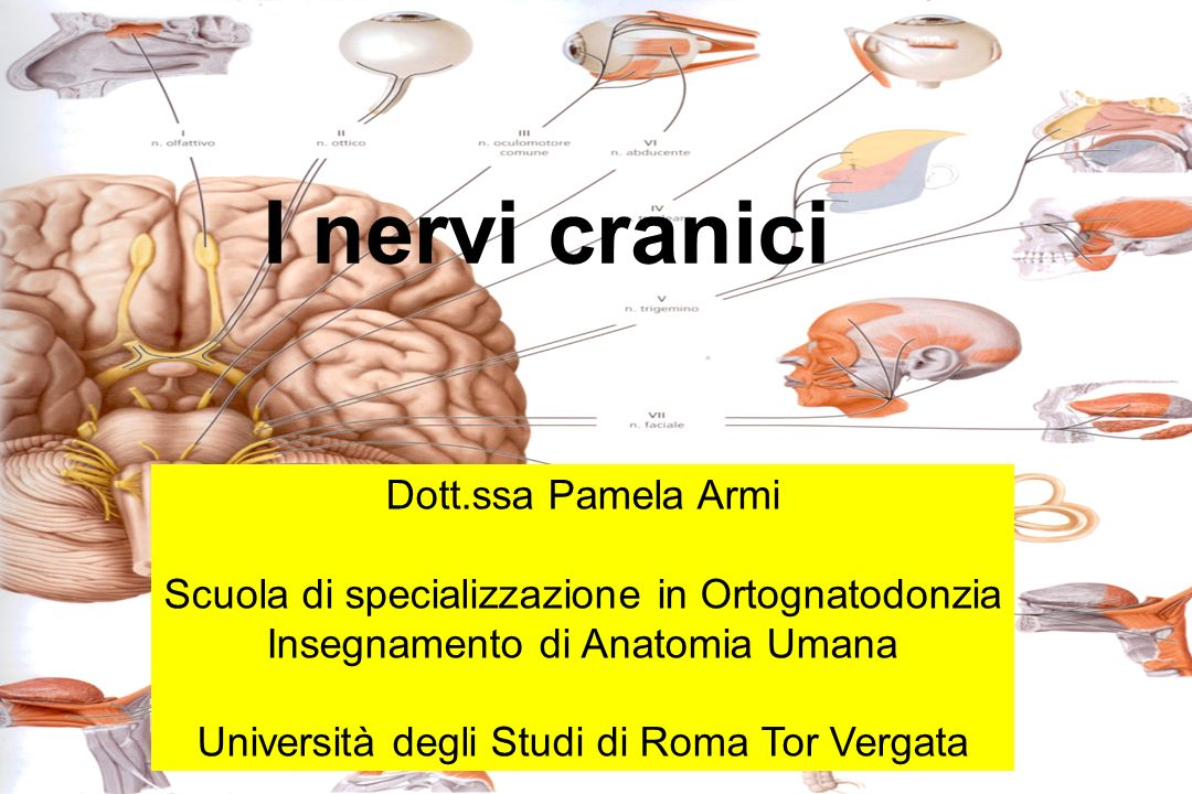 I nervi cranici Dott.ssa Pamela Armi