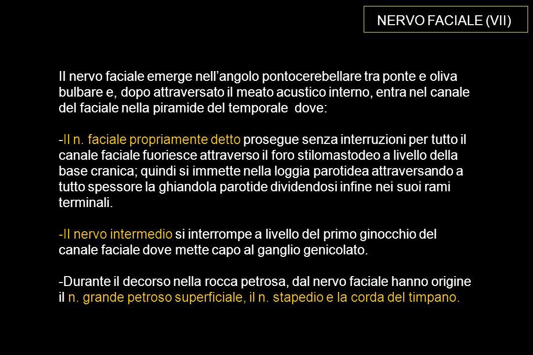 NERVO FACIALE (VII)