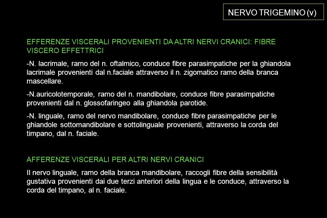 NERVO TRIGEMINO (v) EFFERENZE VISCERALI PROVENIENTI DA ALTRI NERVI CRANICI: FIBRE VISCERO EFFETTRICI.