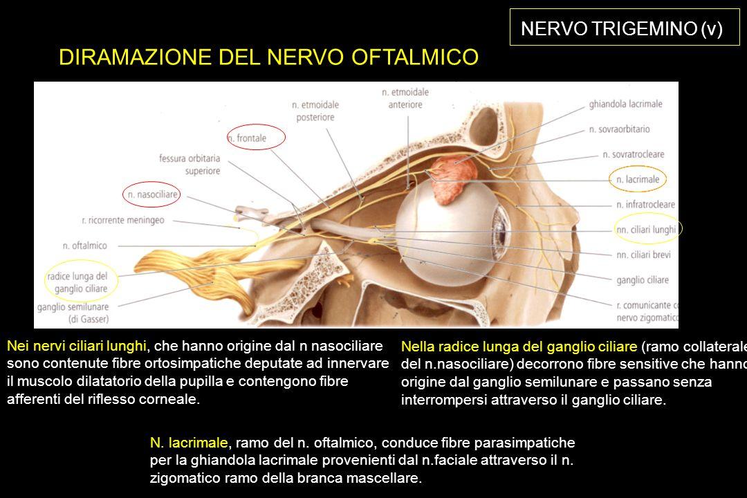 DIRAMAZIONE DEL NERVO OFTALMICO