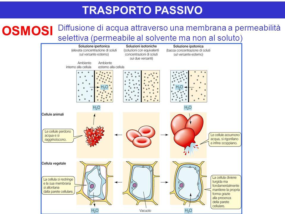 OSMOSI TRASPORTO PASSIVO
