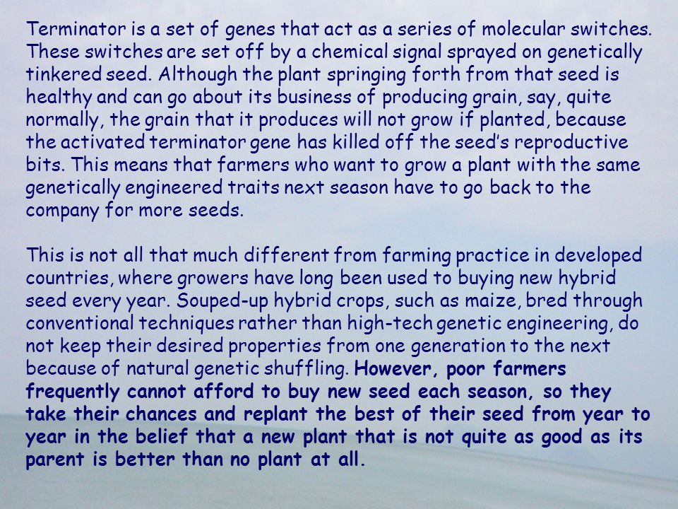 Terminator is a set of genes that act as a series of molecular switches. These switches are set off by a chemical signal sprayed on genetically tinkered seed. Although the plant springing forth from that seed is healthy and can go about its business of producing grain, say, quite normally, the grain that it produces will not grow if planted, because the activated terminator gene has killed off the seed's reproductive bits. This means that farmers who want to grow a plant with the same genetically engineered traits next season have to go back to the company for more seeds.