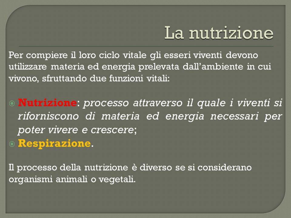 La nutrizione Per compiere il loro ciclo vitale gli esseri viventi devono. utilizzare materia ed energia prelevata dall'ambiente in cui.