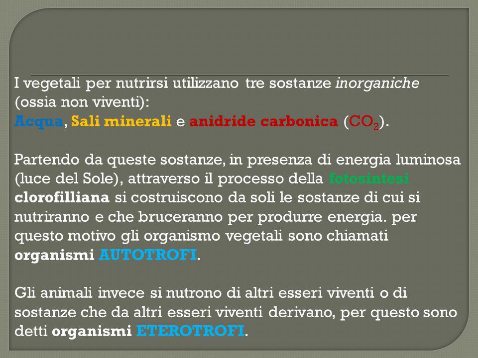 I vegetali per nutrirsi utilizzano tre sostanze inorganiche (ossia non viventi): Acqua, Sali minerali e anidride carbonica (CO2).