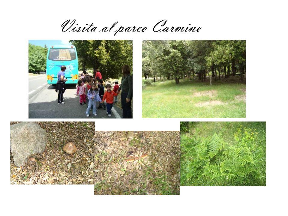 Visita al parco Carmine