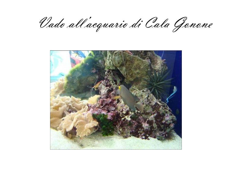 Vado all'acquario di Cala Gonone