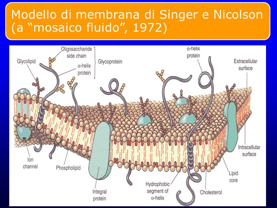 Modello di membrana di Singer e Nicolson (a mosaico fluido , 1972)