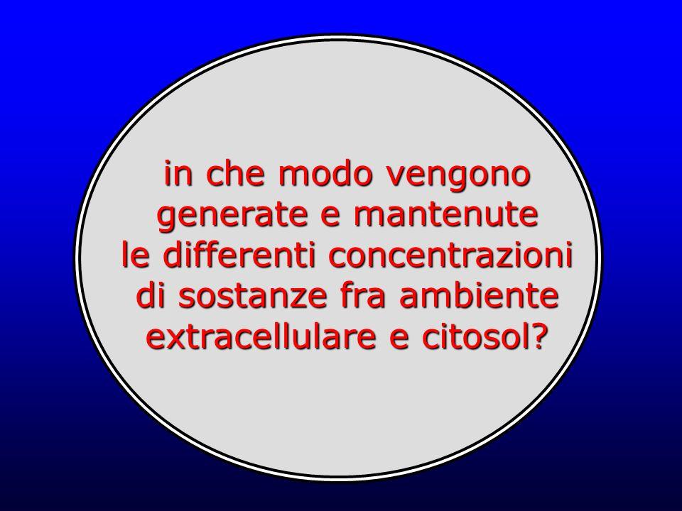 in che modo vengono generate e mantenute le differenti concentrazioni di sostanze fra ambiente extracellulare e citosol