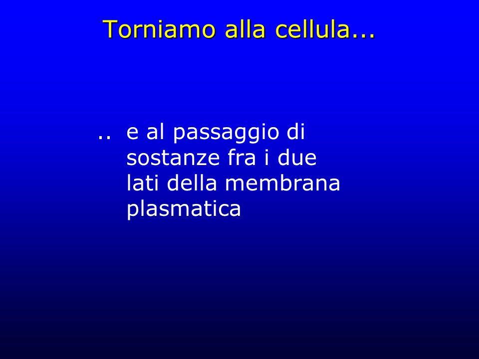 Torniamo alla cellula... .. e al passaggio di sostanze fra i due lati della membrana plasmatica