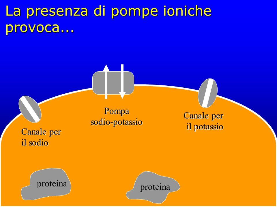 La presenza di pompe ioniche provoca...