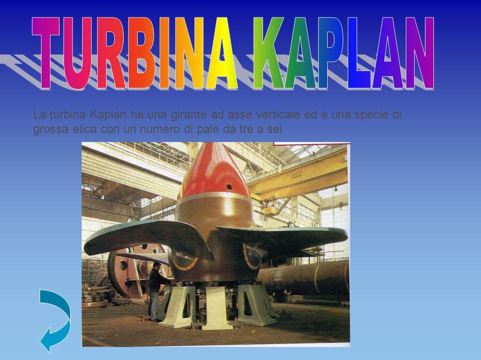 TURBINA KAPLAN La turbina Kaplan ha una girante ad asse verticale ed è una specie di grossa elica con un numero di pale da tre a sei.