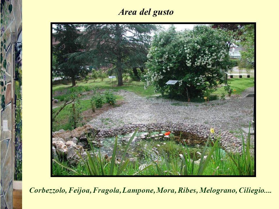 Area del gusto Corbezzolo, Feijoa, Fragola, Lampone, Mora, Ribes, Melograno, Ciliegio....