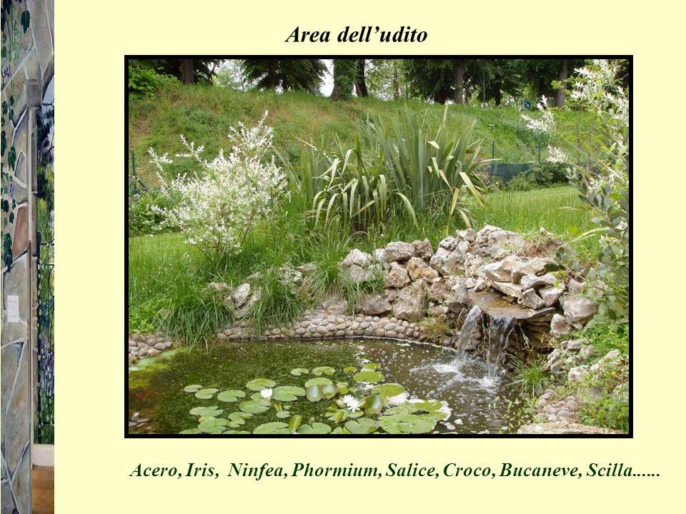 Area dell'udito Acero, Iris, Ninfea, Phormium, Salice, Croco, Bucaneve, Scilla......