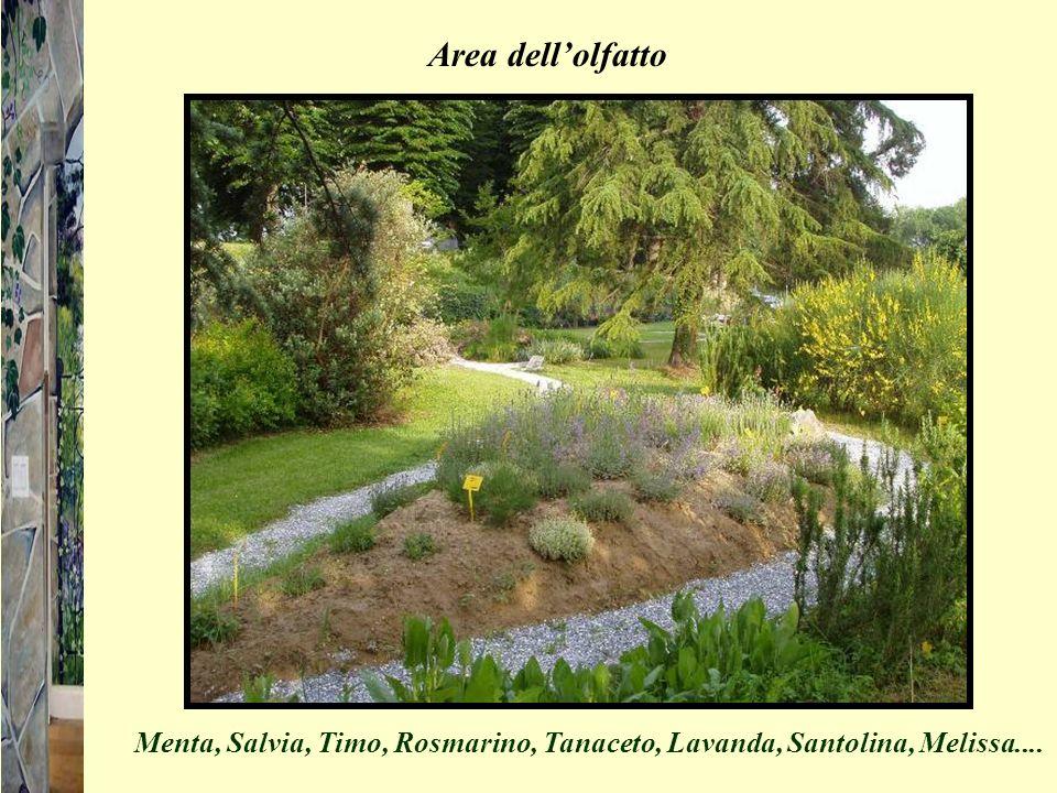 Area dell'olfatto Menta, Salvia, Timo, Rosmarino, Tanaceto, Lavanda, Santolina, Melissa....