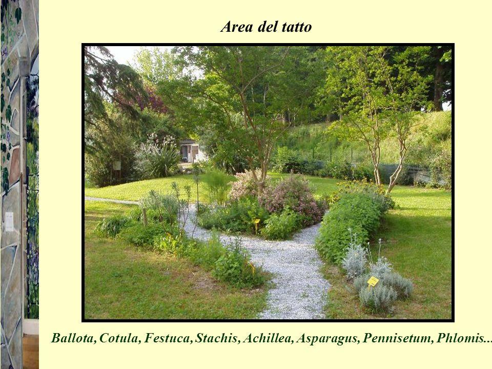 Area del tatto Ballota, Cotula, Festuca, Stachis, Achillea, Asparagus, Pennisetum, Phlomis....