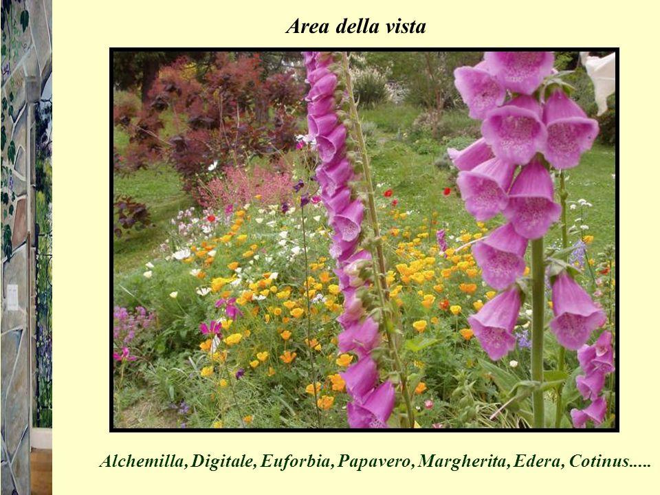 Area della vista Alchemilla, Digitale, Euforbia, Papavero, Margherita, Edera, Cotinus.....
