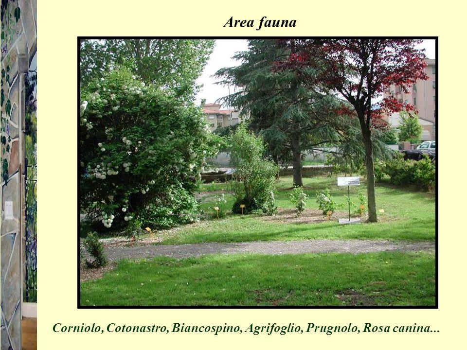 Area fauna Corniolo, Cotonastro, Biancospino, Agrifoglio, Prugnolo, Rosa canina...