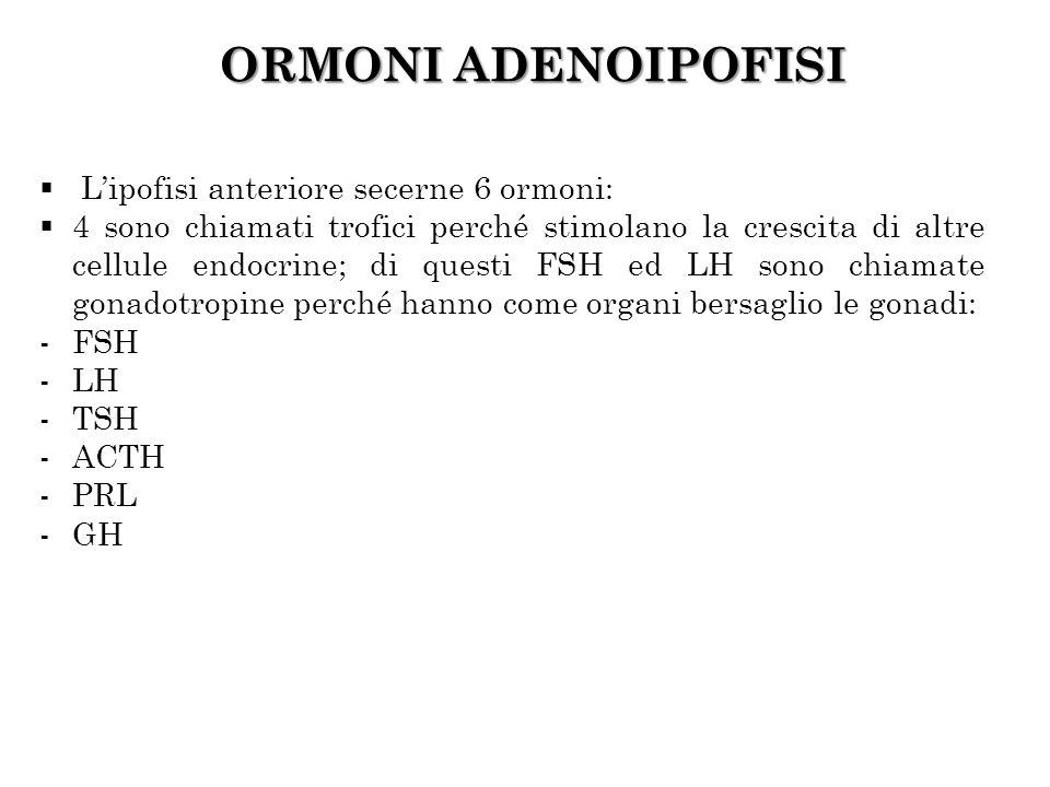 ORMONI ADENOIPOFISI L'ipofisi anteriore secerne 6 ormoni: